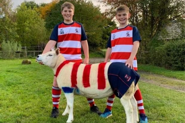 Young Peebles rugby players Archie Smellie (left) and Liam Irvine with sheep Kailziemonogue