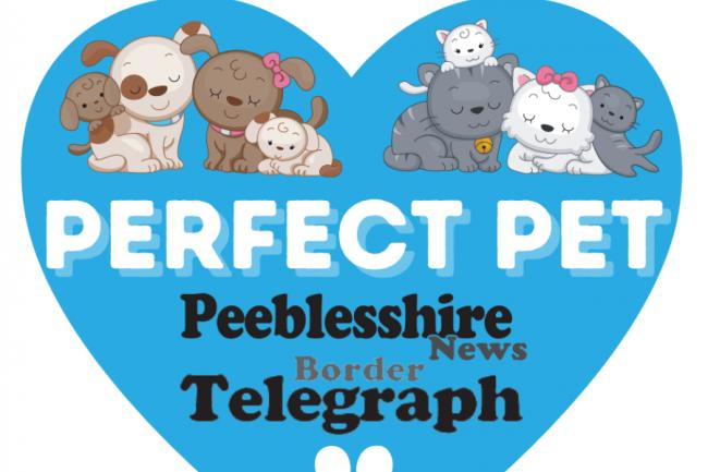 The Perfect Pet competition is run by the Border Telegraph and the Peeblesshire News