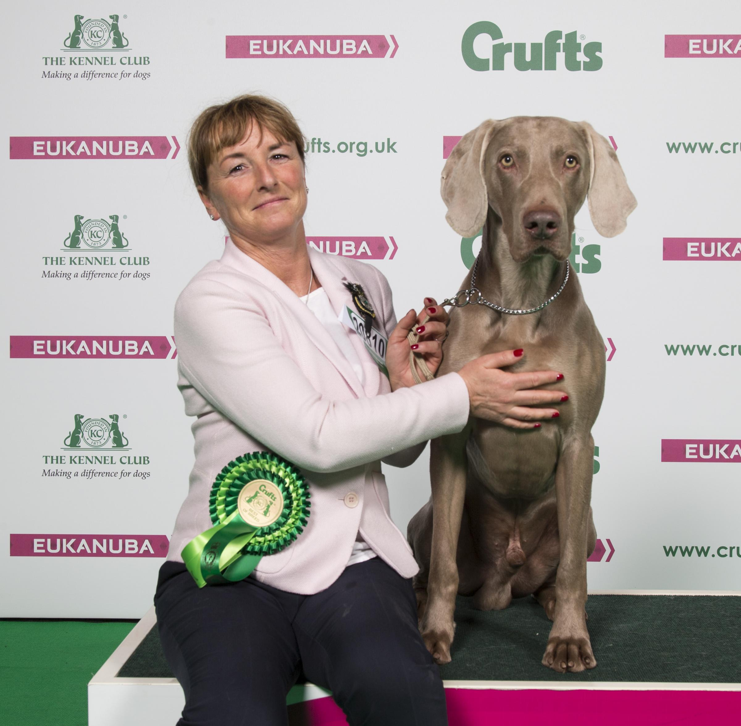 Carol Ruddy from Dolphinton with Kane a Weimaraner, won Best of Breed on the fourth and final day of Crufts 2018. Photo: Flick.digital