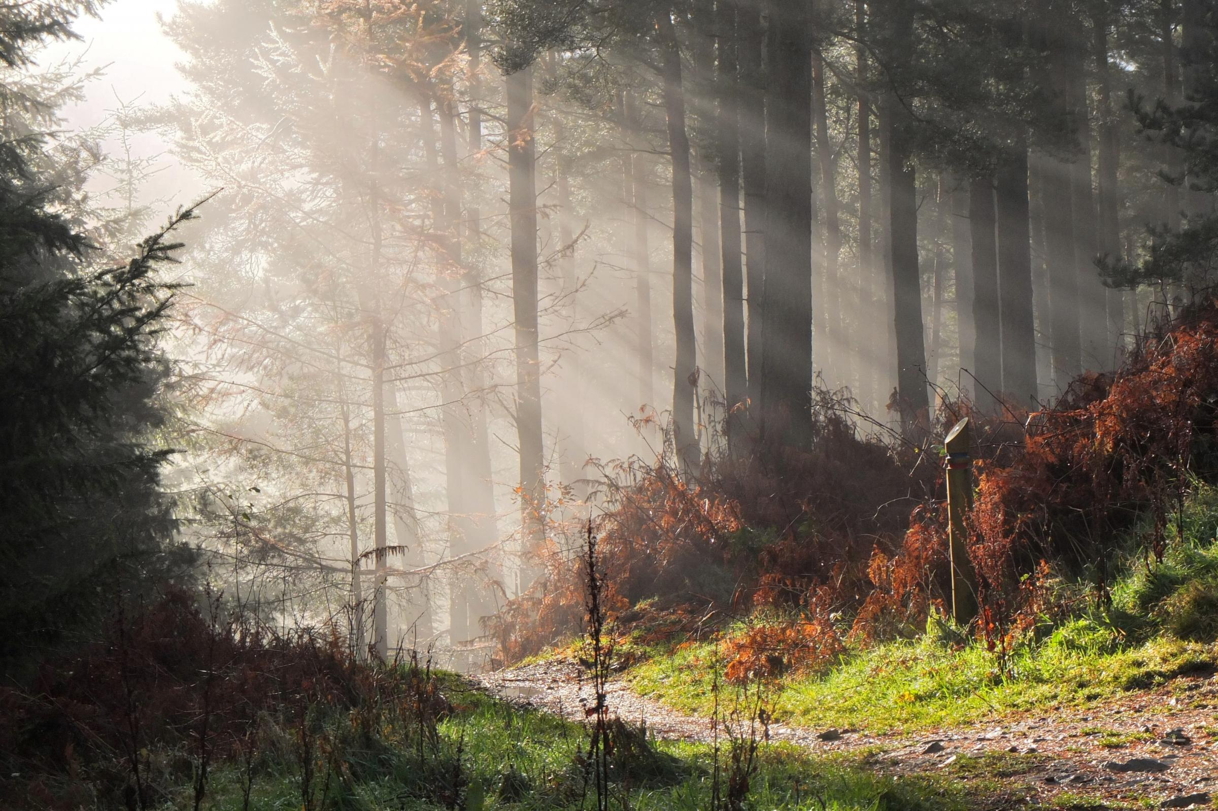 "Jim Barton sent us this photo of ""autumn sunlight in Cademuir Forest"". Send us your readers' photos by emailing editorial@peeblesshirenews.com – or why not join our Peeblesshire News Camera Club? Details can be found at facebook.com/"