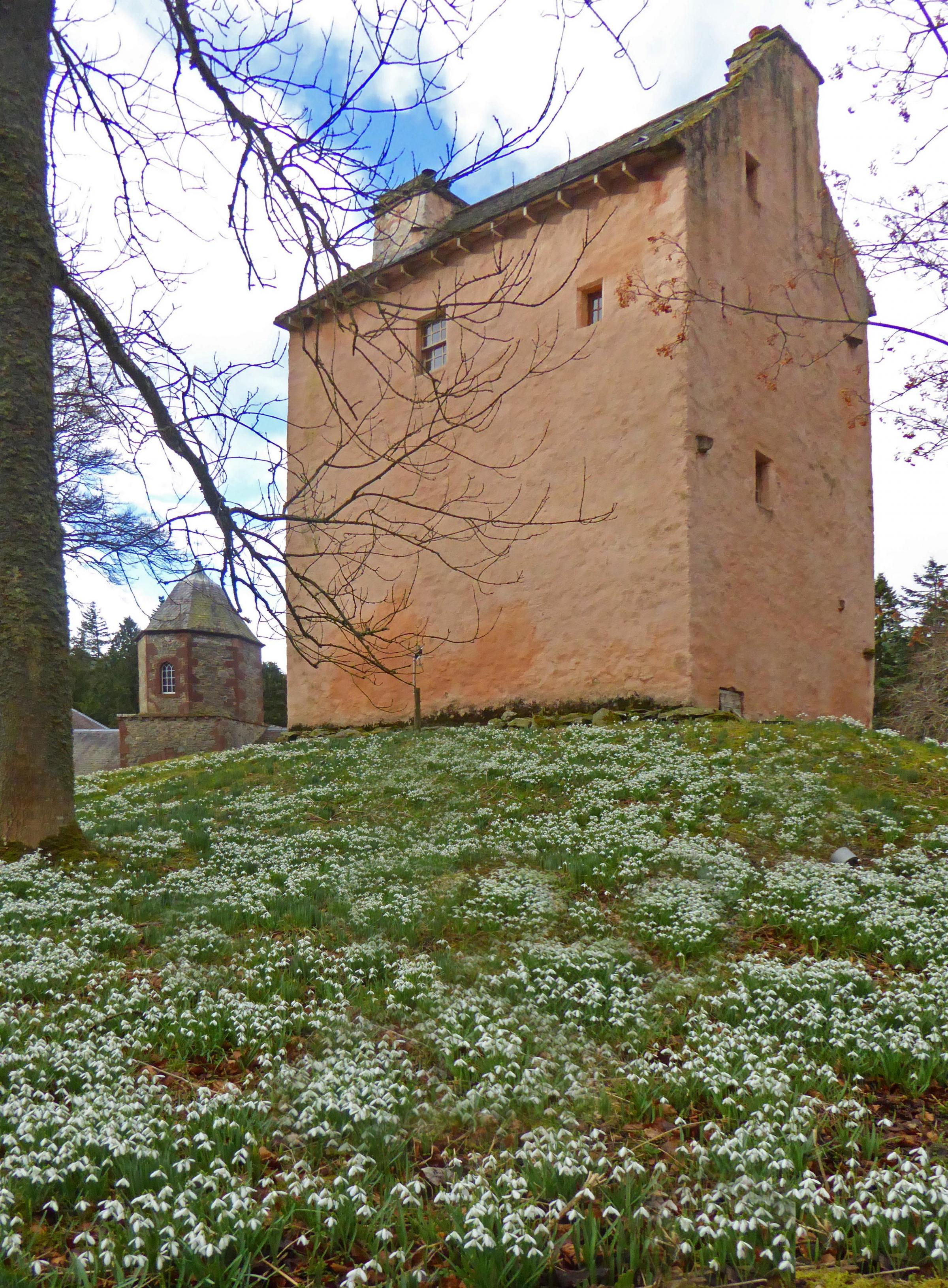This photo, of Snowdrops at Barns Tower, was sent in by Peeblesshire News reader David Baird. Send us your readers' photos by emailing editorial@peeblesshirenews.com – or why not join our Peeblesshire News Camera Club? Details can be found at