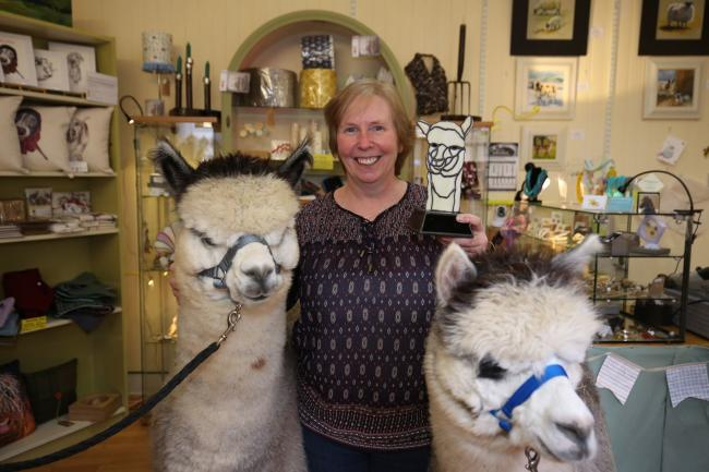 Maureen Brand of Bespoke Glass Innerleithen has created stained glass trophies for the Scottish Alpaca championships.